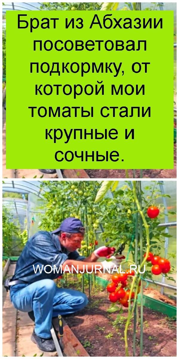 Брат из Абхазии посоветовал подкормку, от которой мои томаты стали крупные и сочные 4