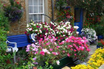Дача для ленивых: 5 растений, которые растут и цветут «сами по себе»1