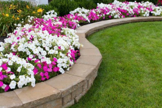 Дача для ленивых: 5 растений, которые растут и цветут «сами по себе» 13