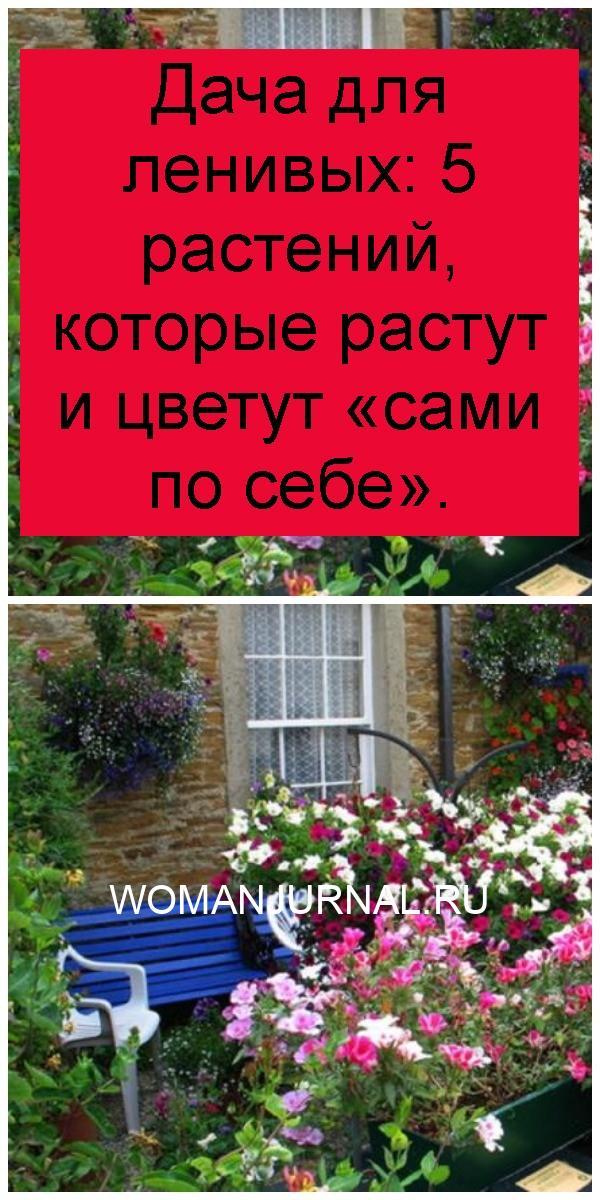 Дача для ленивых: 5 растений, которые растут и цветут «сами по себе» 4