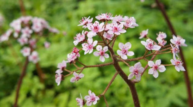 Дача для ленивых: 5 растений, которые растут и цветут «сами по себе» 9
