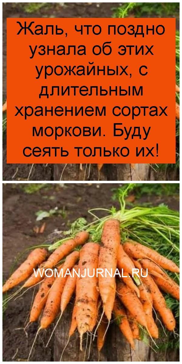 Жаль, что поздно узнала об этих урожайных, с длительным хранением сортах моркови. Буду сеять только их 4