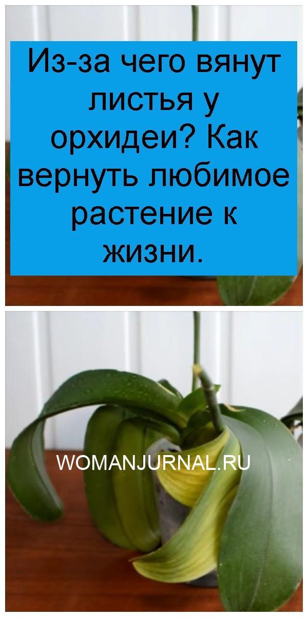 Из-за чего вянут листья у орхидеи? Как вернуть любимое растение к жизни 4