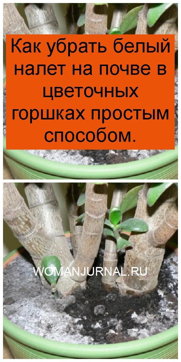 Как убрать белый налет на почве в цветочных горшках простым способом 4