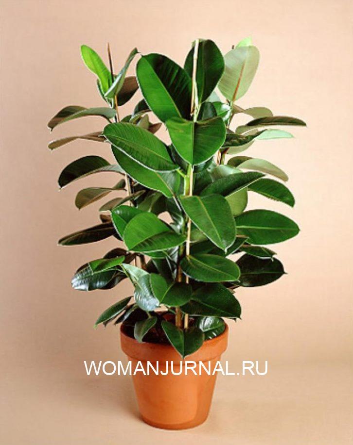 Комнатные растения, которые лучше всего очищают воздух в помещении 8