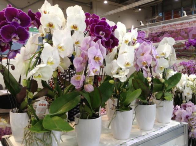 Мои орхидеи — моя гордость! Размножаю их одним секретным способом 5