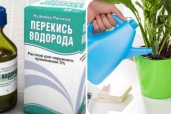 Перекись водорода для комнатных цветов — бальзам в зимнее время 1