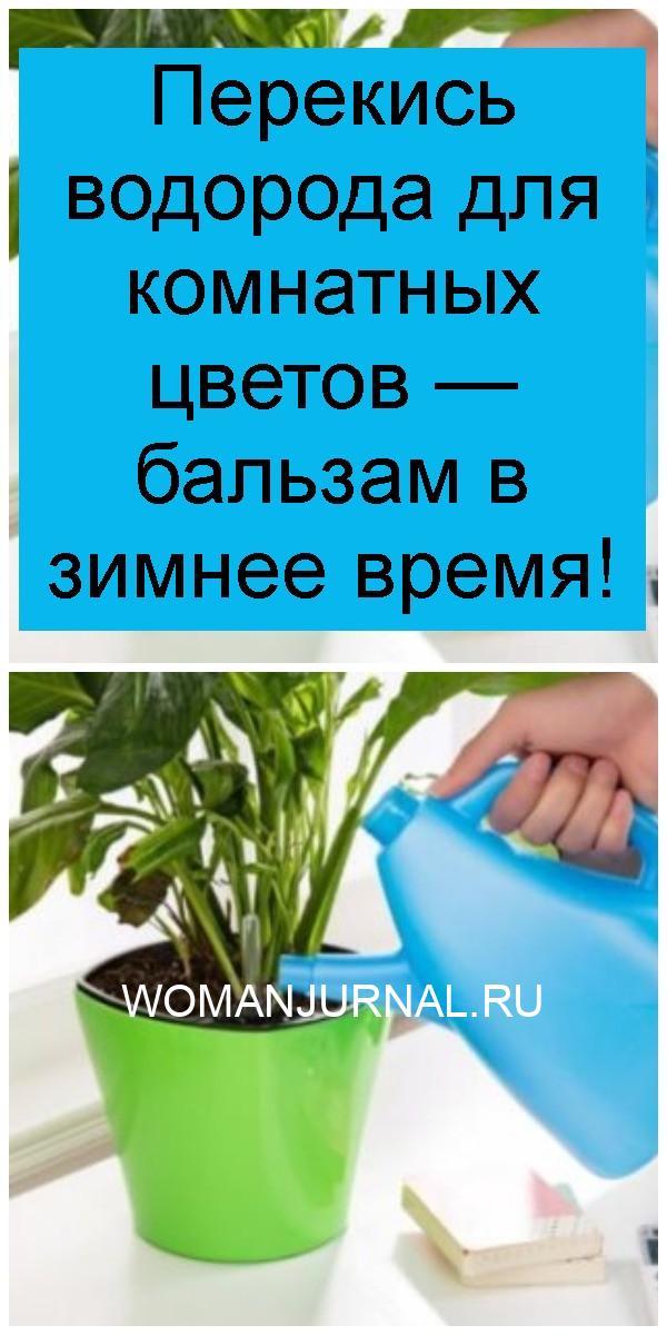 Перекись водорода для комнатных цветов — бальзам в зимнее время 4