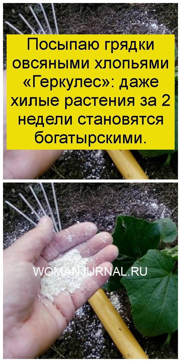 Посыпаю грядки овсяными хлопьями «Геркулес»: даже хилые растения за 2 недели становятся богатырскими 4