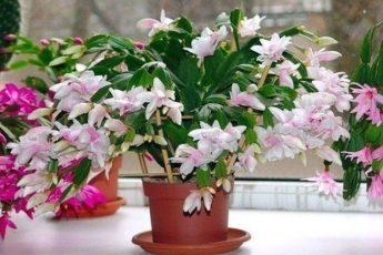 Простая подкормка, которую обожают все комнатные растения 1
