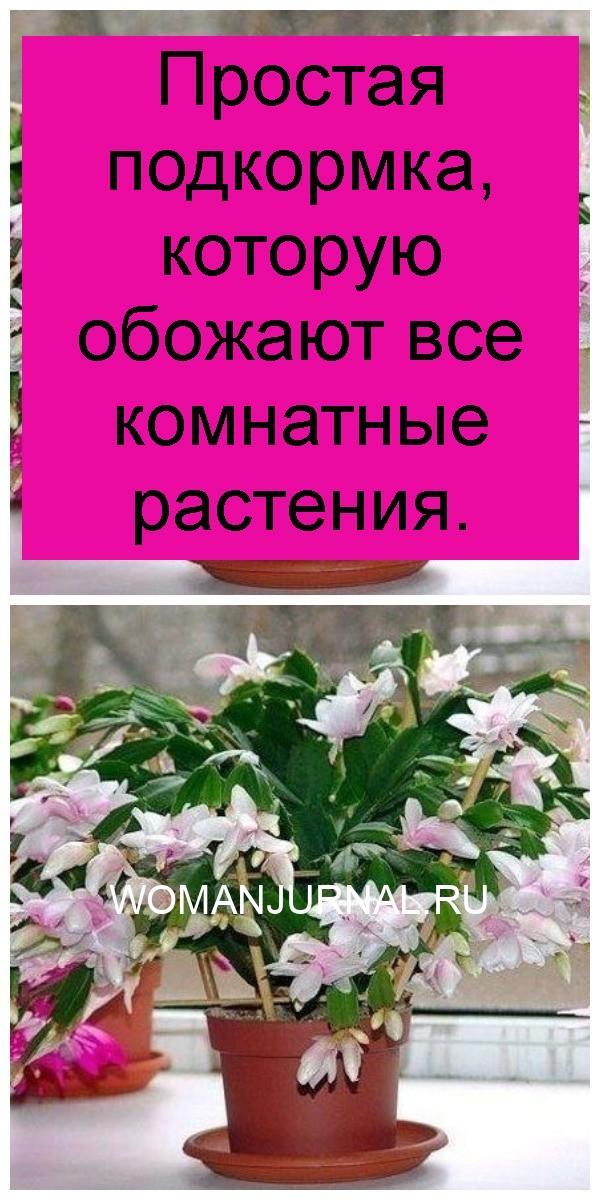 Простая подкормка, которую обожают все комнатные растения 4