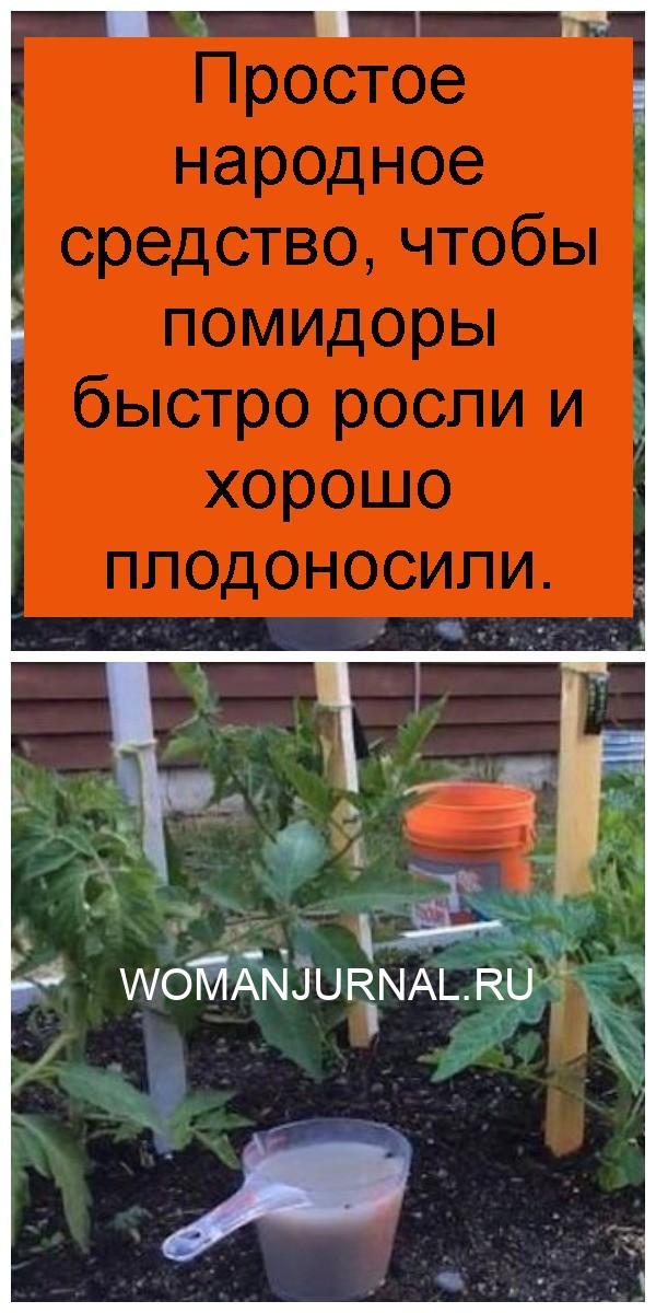 Простое народное средство, чтобы помидоры быстро росли и хорошо плодоносили 4