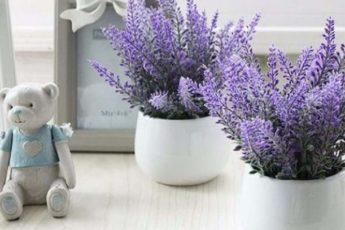 Пять растений для спальни, которые помогут улучшить качество сна 1