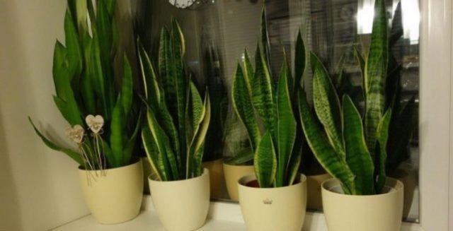 Пять растений для спальни, которые помогут улучшить качество сна 9