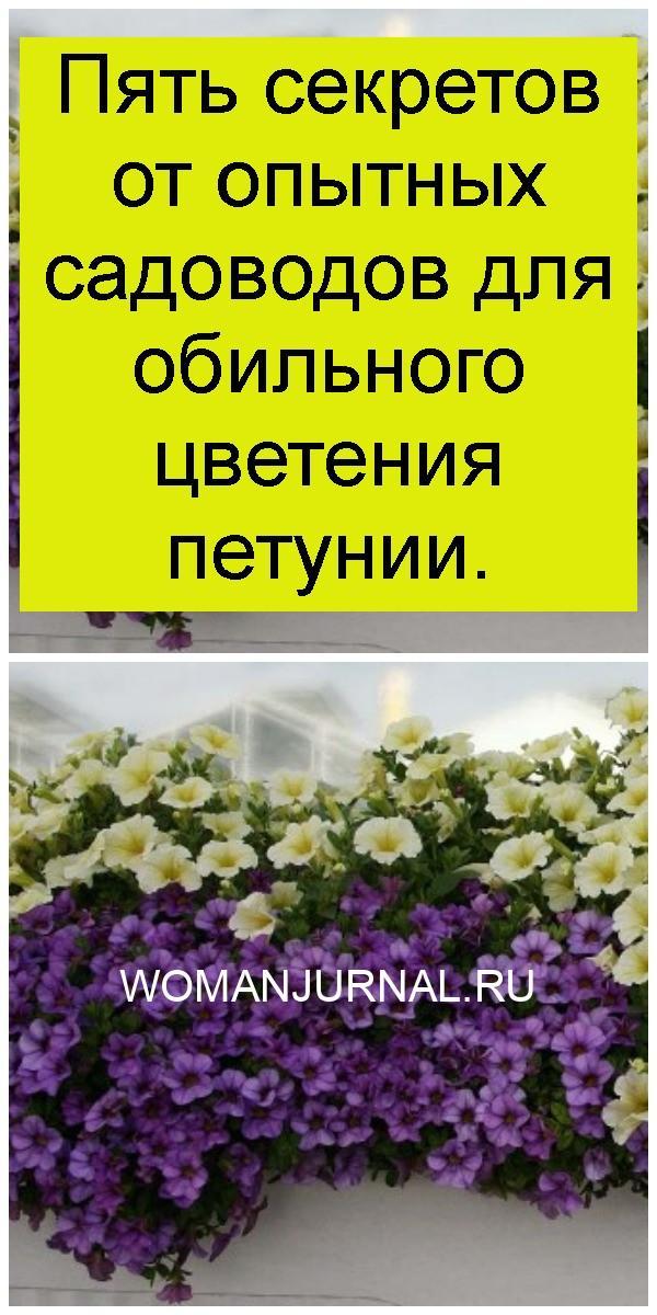 Пять секретов от опытных садоводов для обильного цветения петунии 4