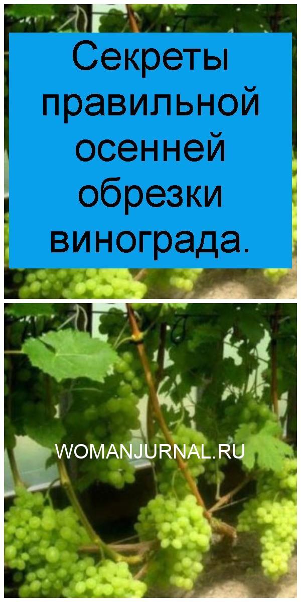 Секреты правильной осенней обрезки винограда 4
