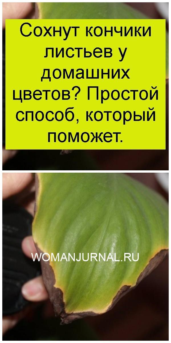 Сохнут кончики листьев у домашних цветов? Простой способ, который поможет 4