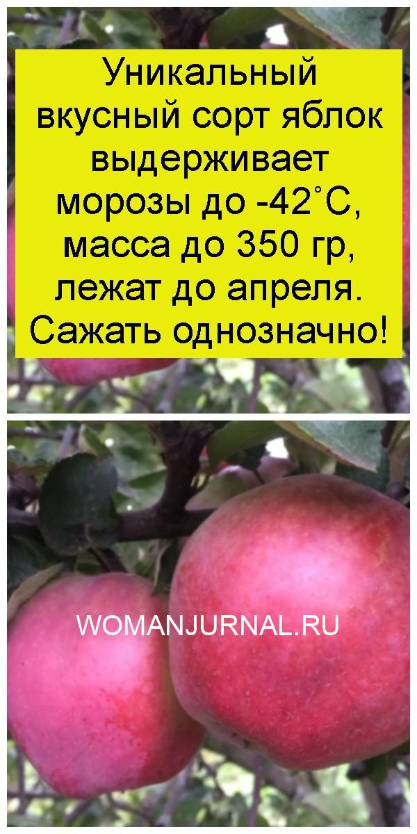 Уникальный вкусный сорт яблок выдерживает морозы до -42˚С, масса до 350 гр, лежат до апреля. Сажать однозначно 4