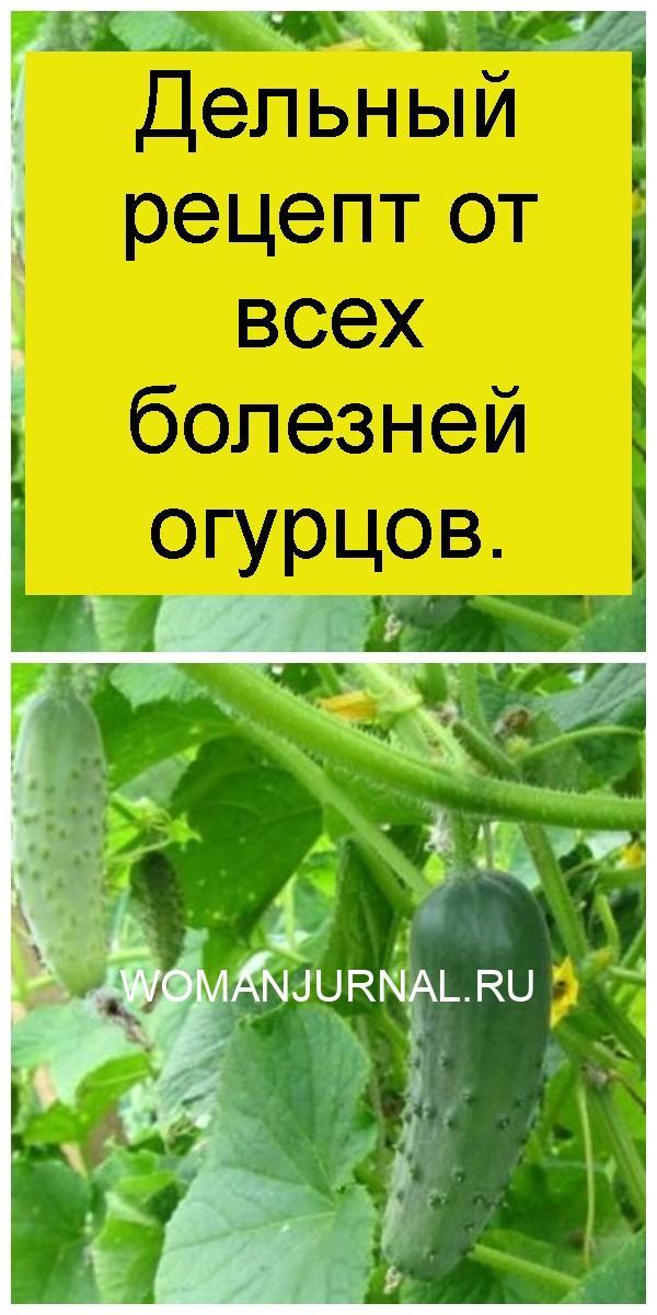 Дельный рецепт от всех болезней огурцов 4