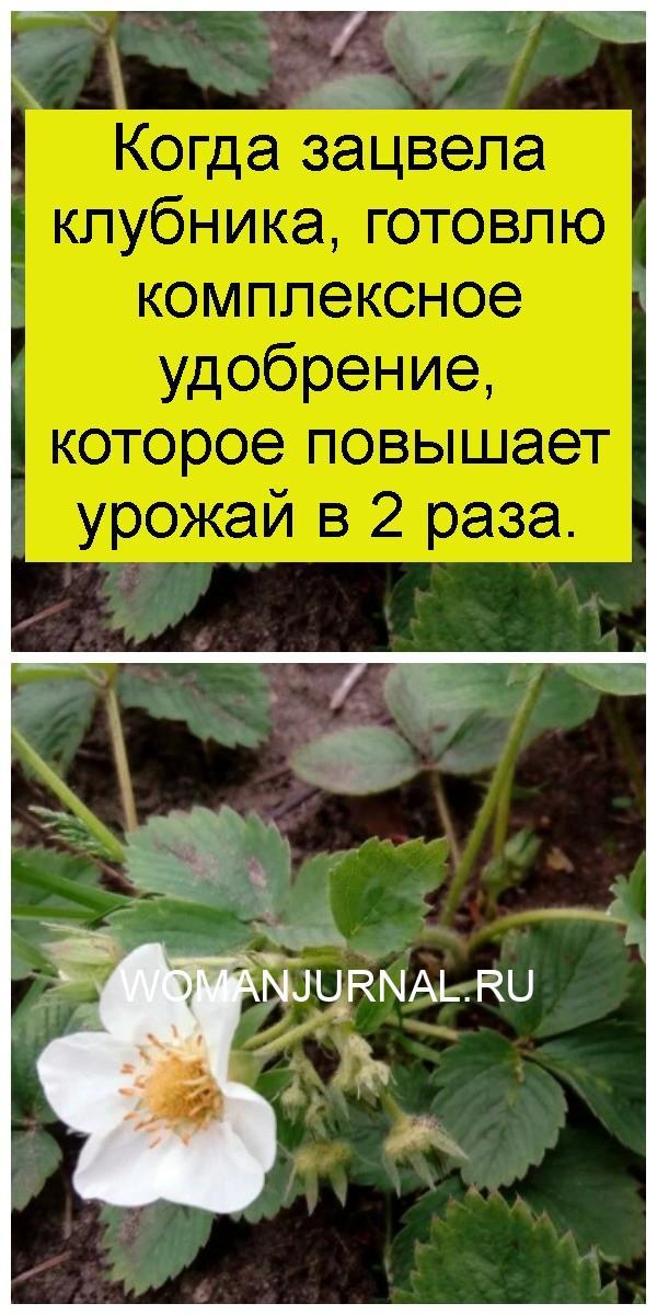 Когда зацвела клубника, готовлю комплексное удобрение, которое повышает урожай в 2 раза 4