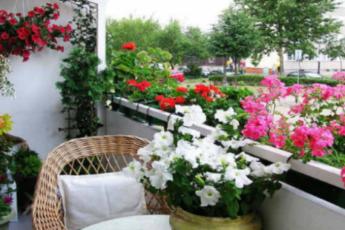 Хотите роскошный цветник в квартире? Тогда запоминайте секретики 1