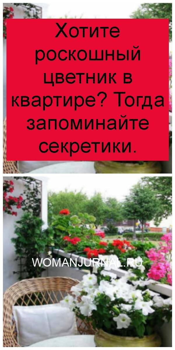 Хотите роскошный цветник в квартире? Тогда запоминайте секретики 4