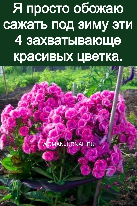 Я просто обожаю сажать под зиму эти 4 захватывающе красивых цветка 3