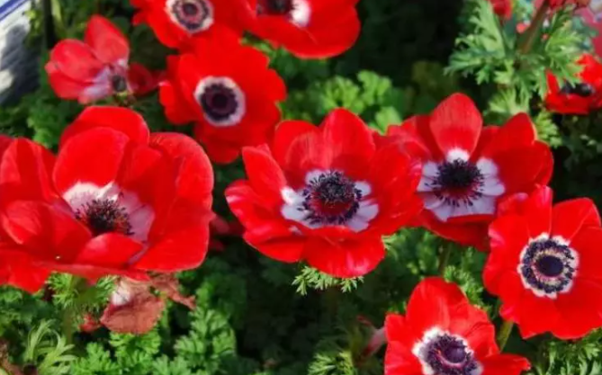 Я просто обожаю сажать под зиму эти 4 захватывающе красивых цветка 8